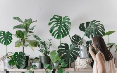 Cómo decorar con plantas de interior